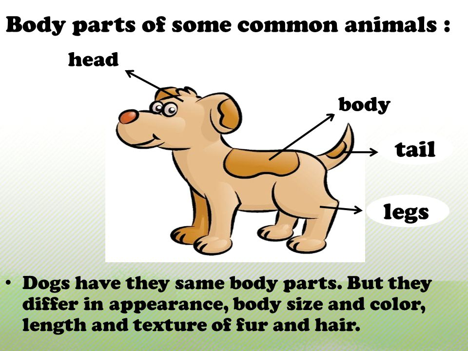 Body parts of some common animals : Dogs have they same body parts.