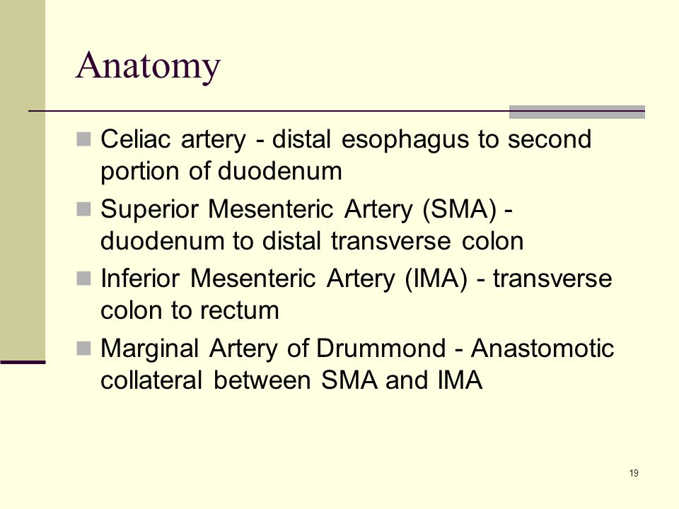 Anatomy Celiac artery - distal esophagus to second portion of duodenum Superior Mesenteric Artery (SMA) - duodenum to distal transverse colon Inferior Mesenteric Artery (IMA) - transverse colon to rectum Marginal Artery of Drummond - Anastomotic collateral between SMA and IMA 19