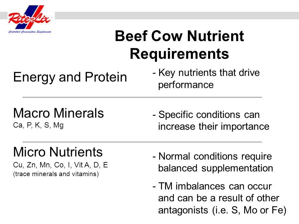 Estimate 10% improvement (11.0 + 1.1= 12.1lbs.TDN) (Cow requirement = 11.9 lbs.