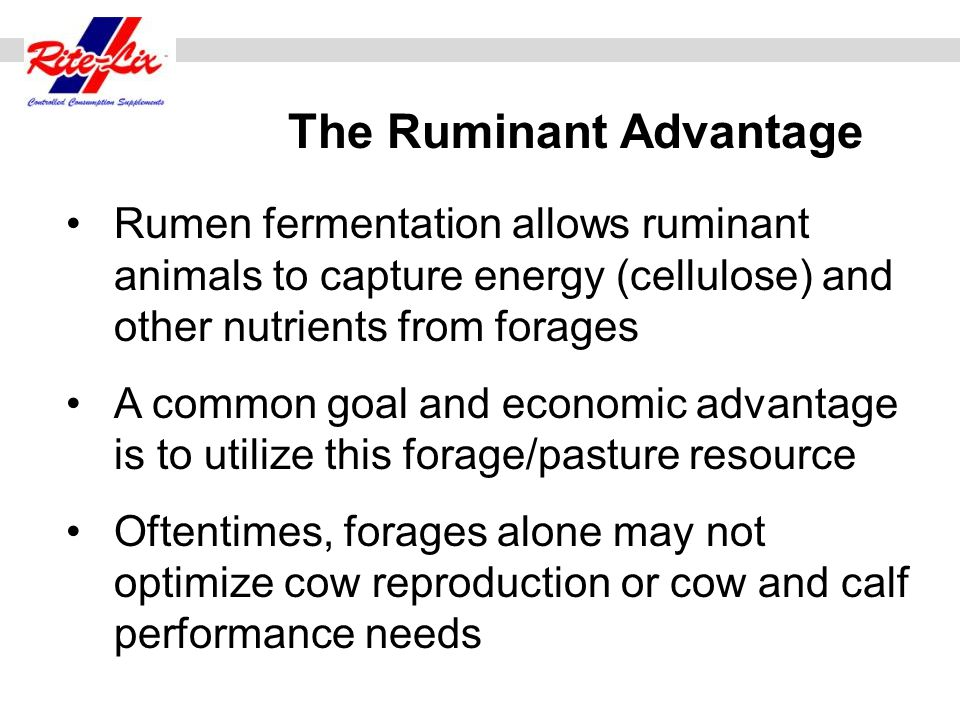 When rumen degradable protein supplements are fed they stimulate fiber fermentation by having a positive associative effect on microbial populations in the rumen Positive Associative Effect 2 + 2 = 5