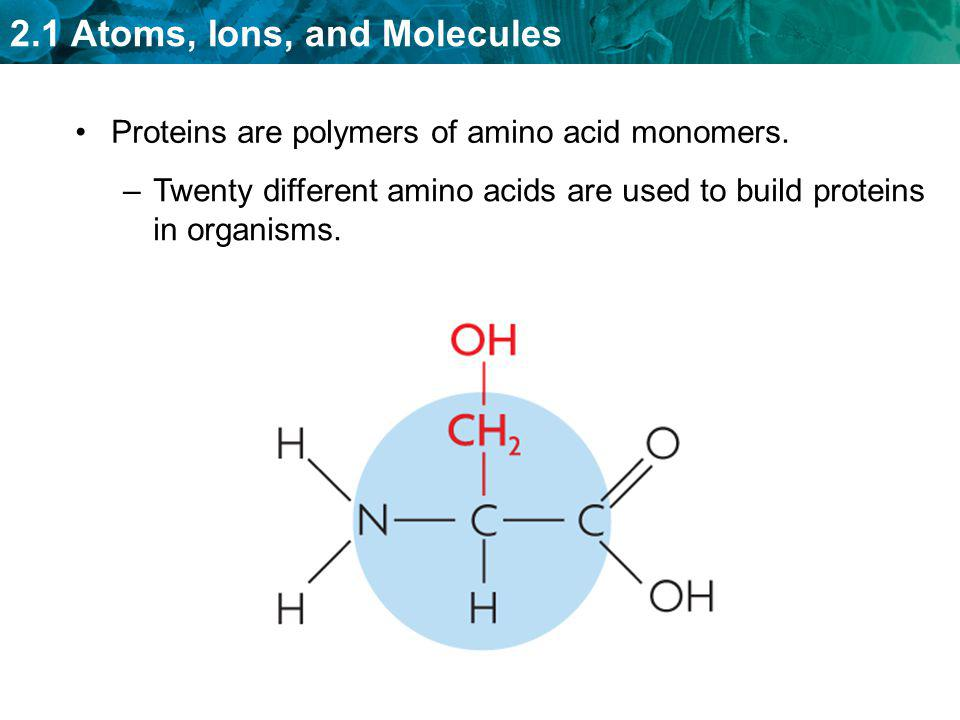 2.1 Atoms, Ions, and Molecules Proteins are polymers of amino acid monomers. –Twenty different amino acids are used to build proteins in organisms.