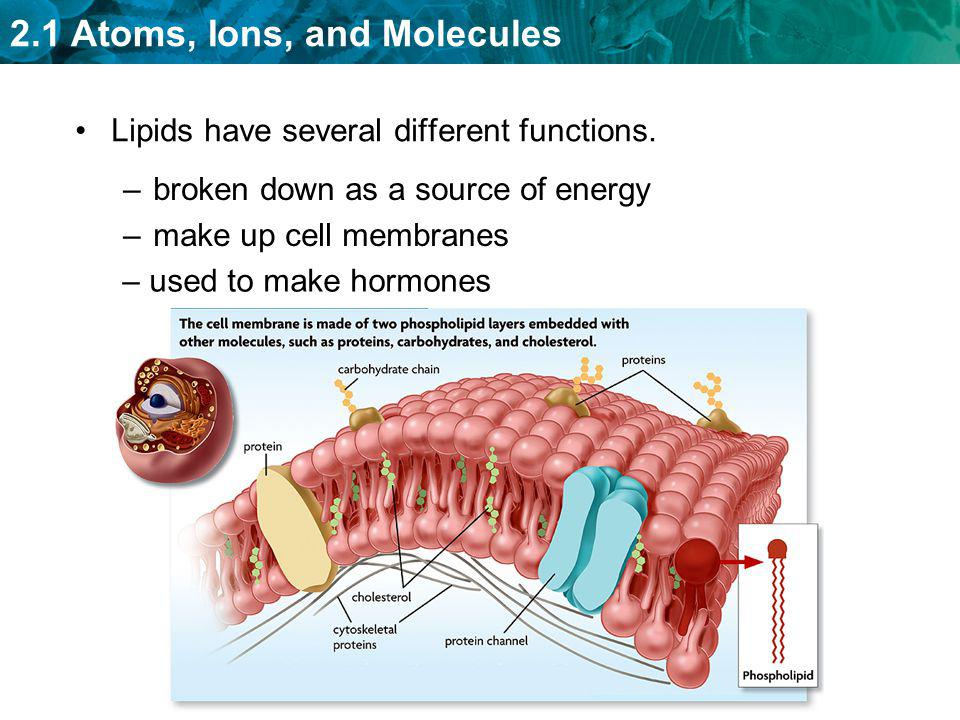 2.1 Atoms, Ions, and Molecules Lipids have several different functions. –broken down as a source of energy –make up cell membranes – used to make horm