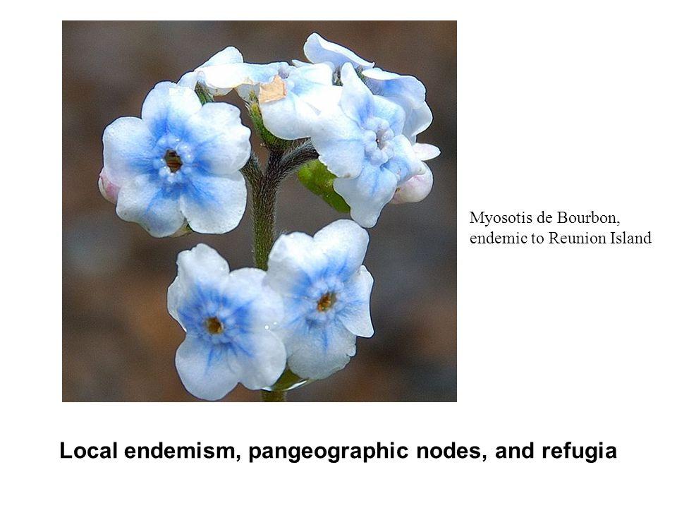 Local endemism, pangeographic nodes, and refugia Myosotis de Bourbon, endemic to Reunion Island