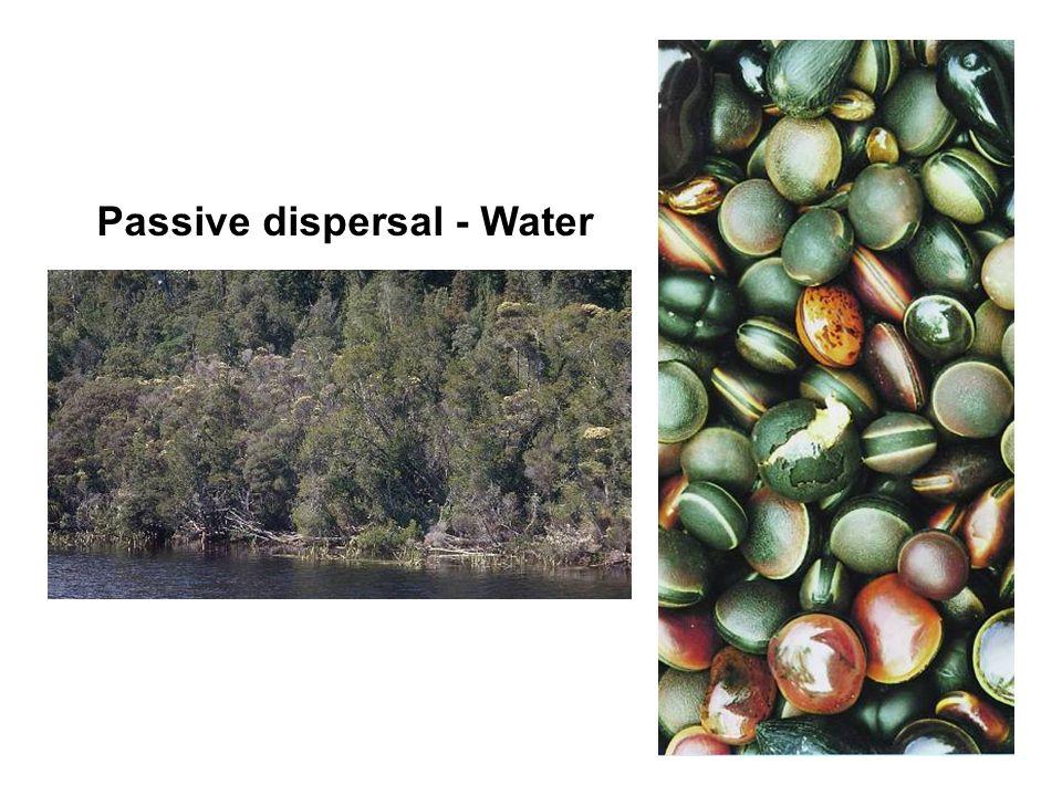 Passive dispersal - Water