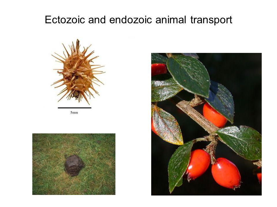 Ectozoic and endozoic animal transport