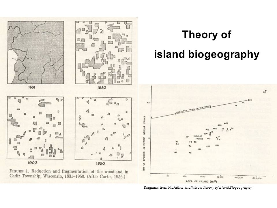 Theory of island biogeography Diagrams from McArthur and Wilson Theory of Island Biogeography