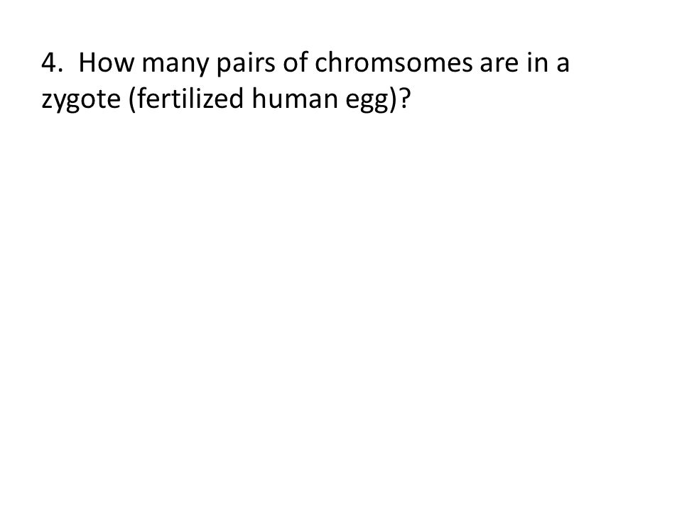 4. How many pairs of chromsomes are in a zygote (fertilized human egg)?