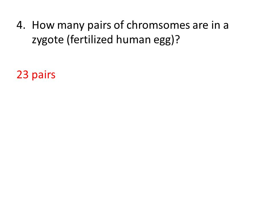 4.How many pairs of chromsomes are in a zygote (fertilized human egg) 23 pairs