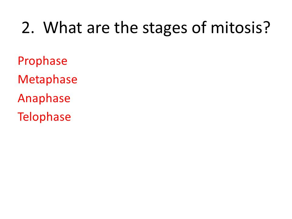 2. What are the stages of mitosis? Prophase Metaphase Anaphase Telophase