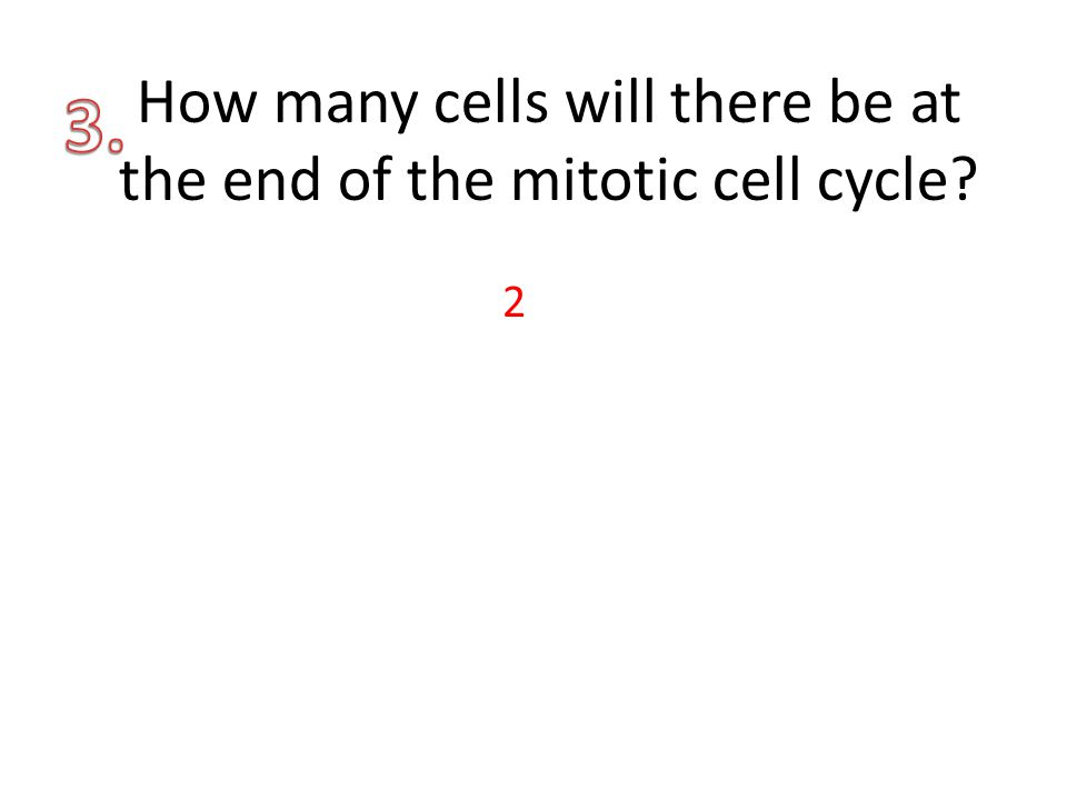 How many cells will there be at the end of the mitotic cell cycle? 2