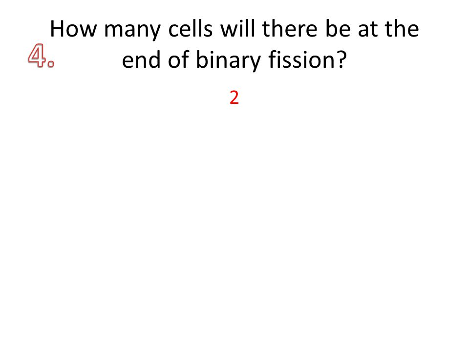 How many cells will there be at the end of binary fission? 2