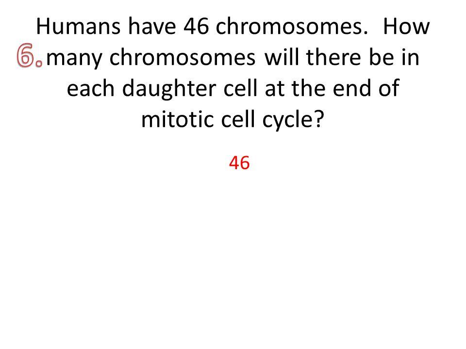 Humans have 46 chromosomes.