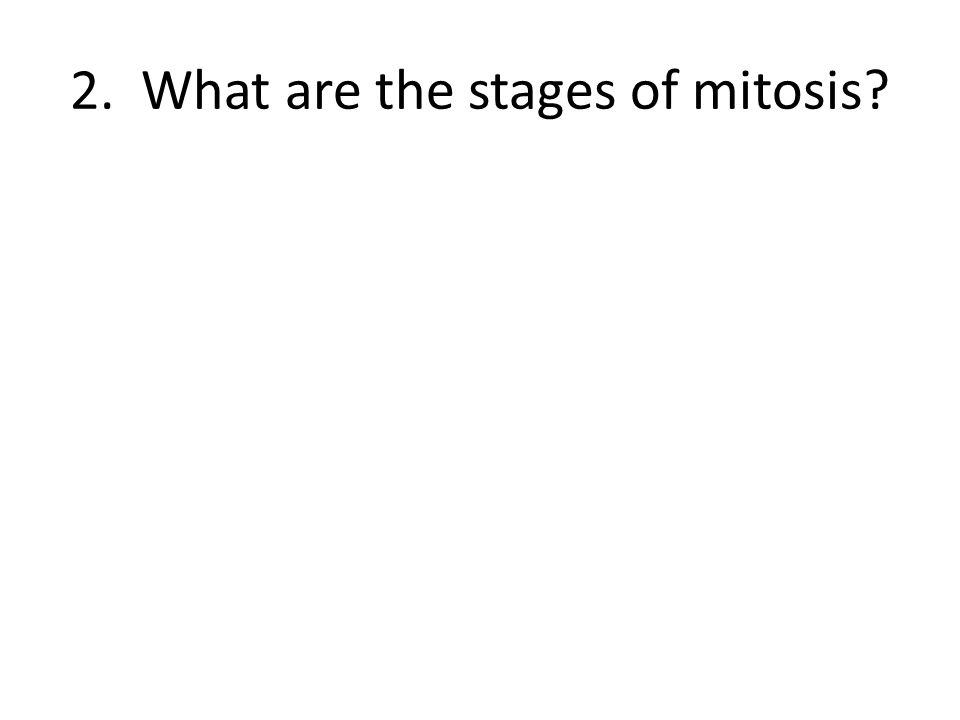 2. What are the stages of mitosis?