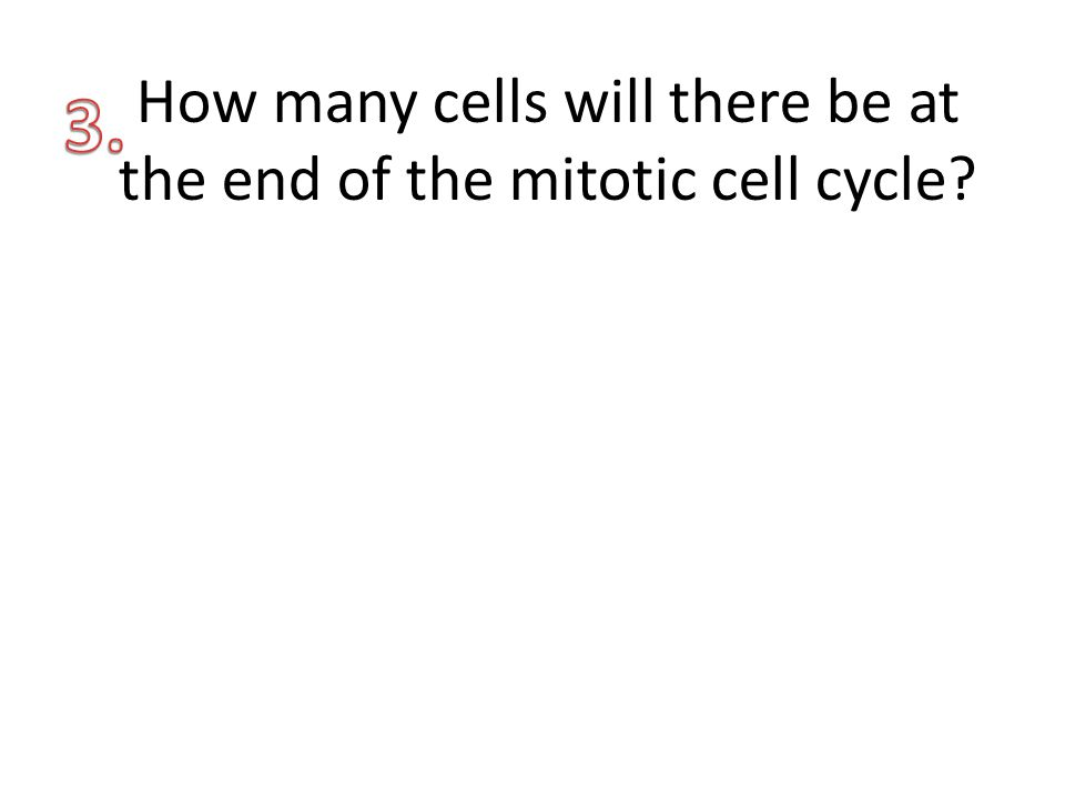 How many cells will there be at the end of the mitotic cell cycle?