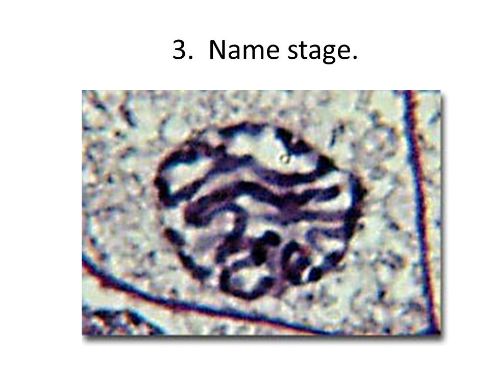 3. Name stage.
