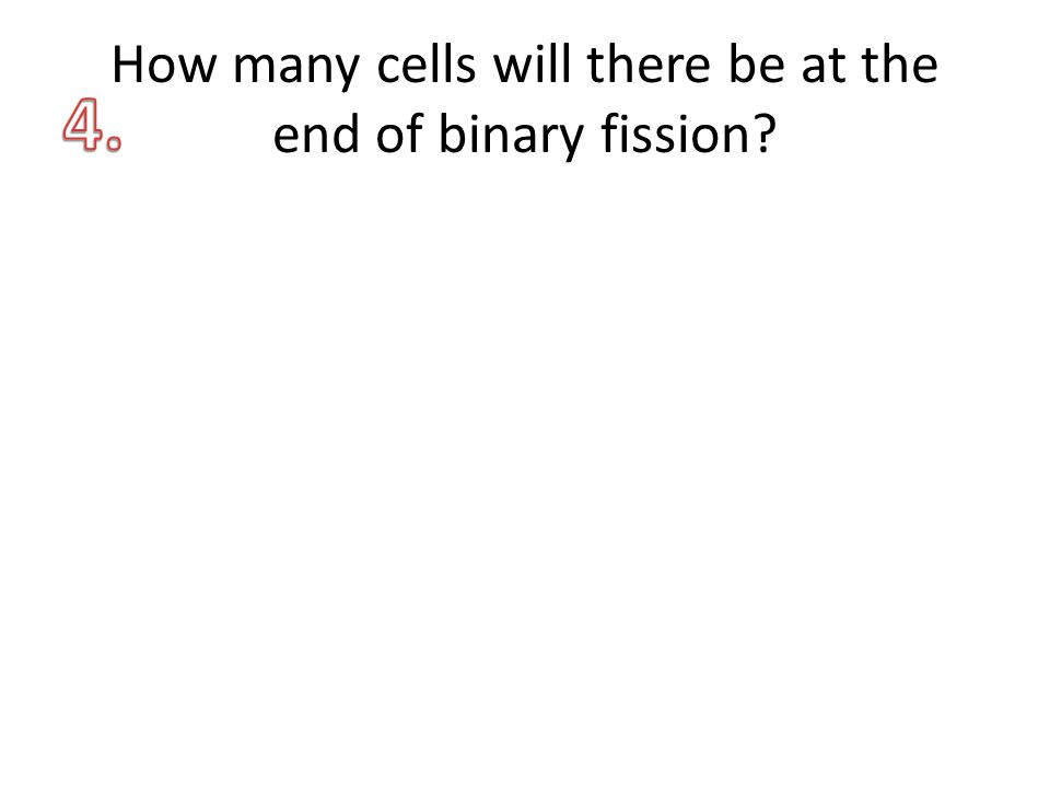 How many cells will there be at the end of binary fission?
