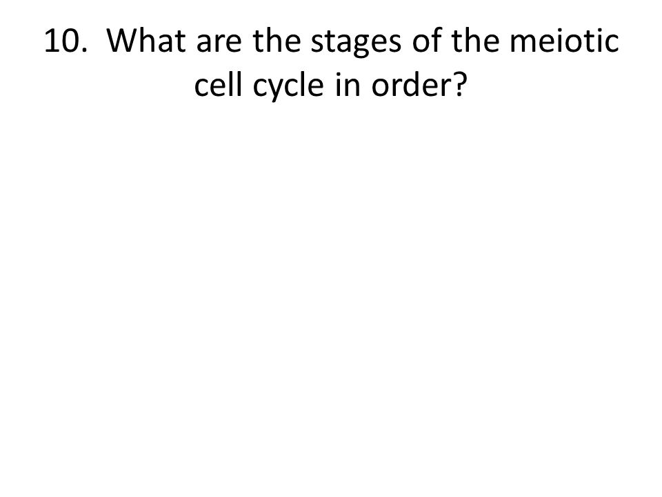 10. What are the stages of the meiotic cell cycle in order