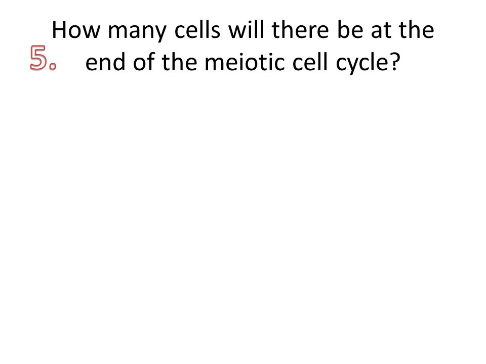 How many cells will there be at the end of the meiotic cell cycle