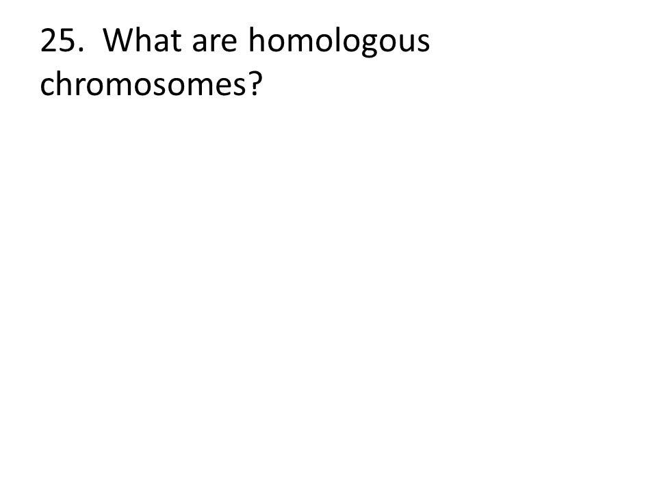 25. What are homologous chromosomes