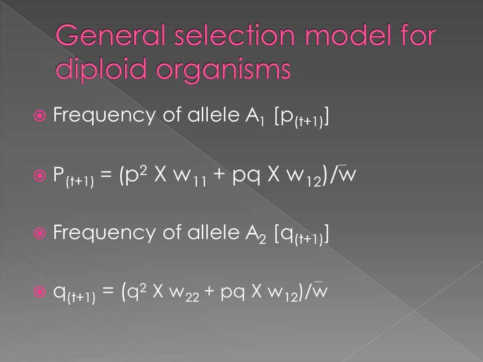  Frequency of allele A 1 [p (t+1) ]  P (t+1) = ( p 2 X w 11 + pq X w 12 )/w  Frequency of allele A 2 [q (t+1) ]  q (t+1) = ( q 2 X w 22 + pq X w 1