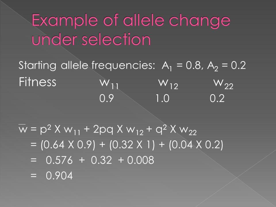 Starting allele frequencies: A 1 = 0.8, A 2 = 0.2 Fitnessw 11 w 12 w 22 0.91.00.2 w = p 2 X w 11 + 2pq X w 12 + q 2 X w 22 = (0.64 X 0.9) + (0.32 X 1)