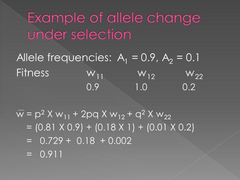 Allele frequencies: A 1 = 0.9, A 2 = 0.1 Fitnessw 11 w 12 w 22 0.91.00.2 w = p 2 X w 11 + 2pq X w 12 + q 2 X w 22 = (0.81 X 0.9) + (0.18 X 1) + (0.01