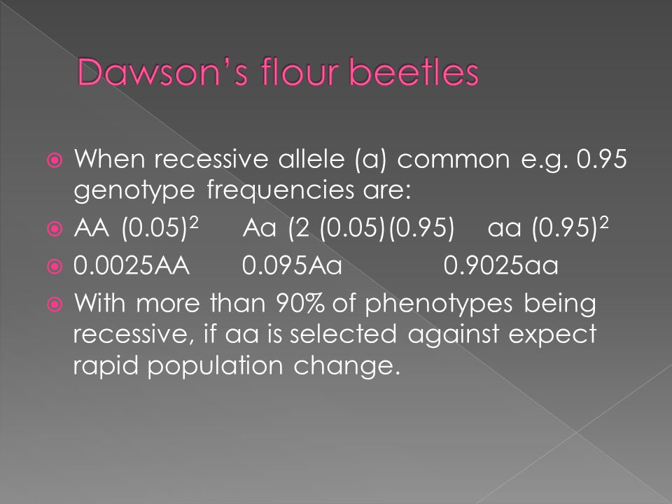  When recessive allele (a) common e.g. 0.95 genotype frequencies are:  AA (0.05) 2 Aa (2 (0.05)(0.95) aa (0.95) 2  0.0025AA 0.095Aa 0.9025aa  With