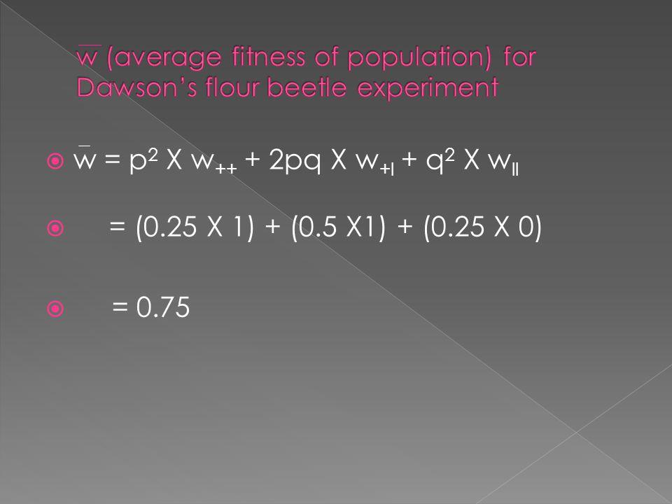  w = p 2 X w ++ + 2pq X w +l + q 2 X w ll  = (0.25 X 1) + (0.5 X1) + (0.25 X 0)  = 0.75