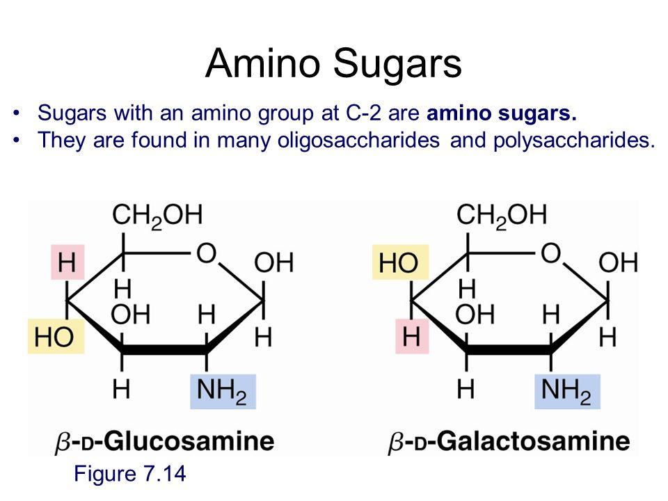 Amino Sugars Figure 7.14 Sugars with an amino group at C-2 are amino sugars. They are found in many oligosaccharides and polysaccharides.