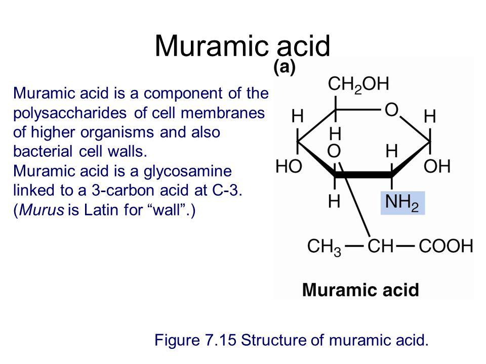 Muramic acid Figure 7.15 Structure of muramic acid.