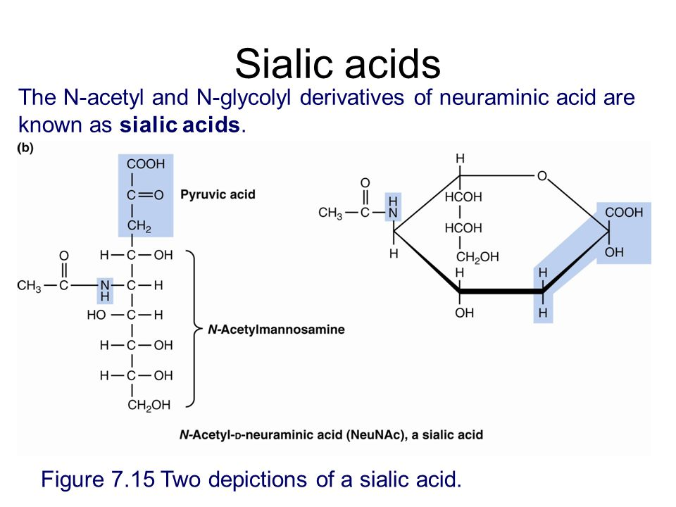 Sialic acids The N-acetyl and N-glycolyl derivatives of neuraminic acid are known as sialic acids.