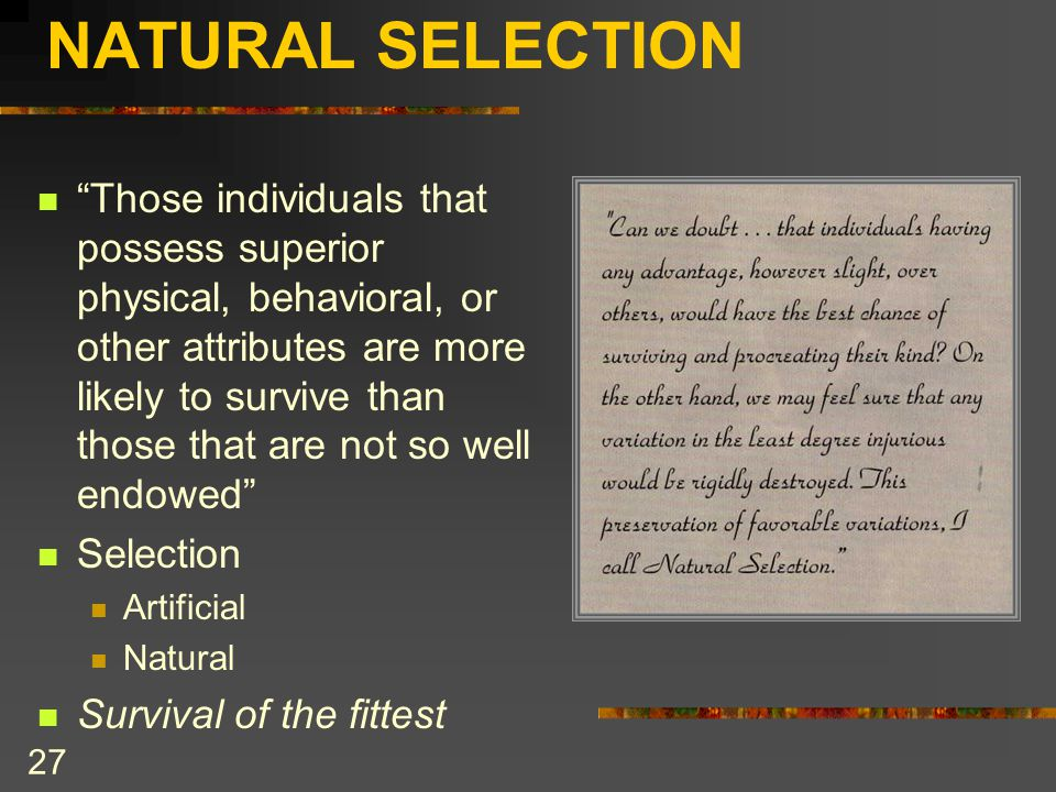 """NATURAL SELECTION """"Those individuals that possess superior physical, behavioral, or other attributes are more likely to survive than those that are no"""