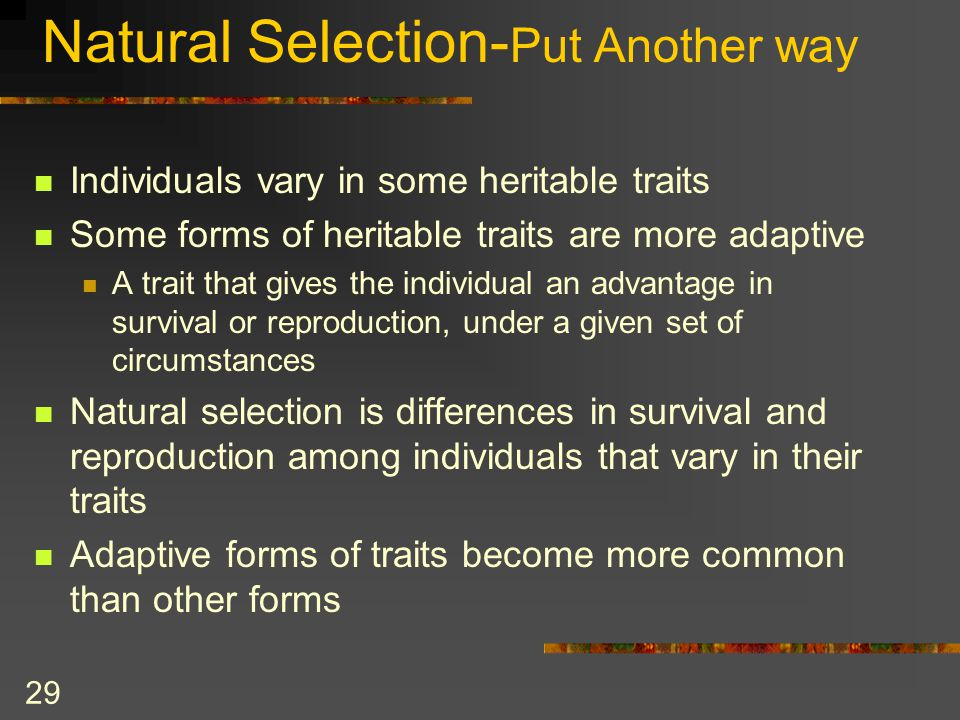 Natural Selection- Put Another way Individuals vary in some heritable traits Some forms of heritable traits are more adaptive A trait that gives the i