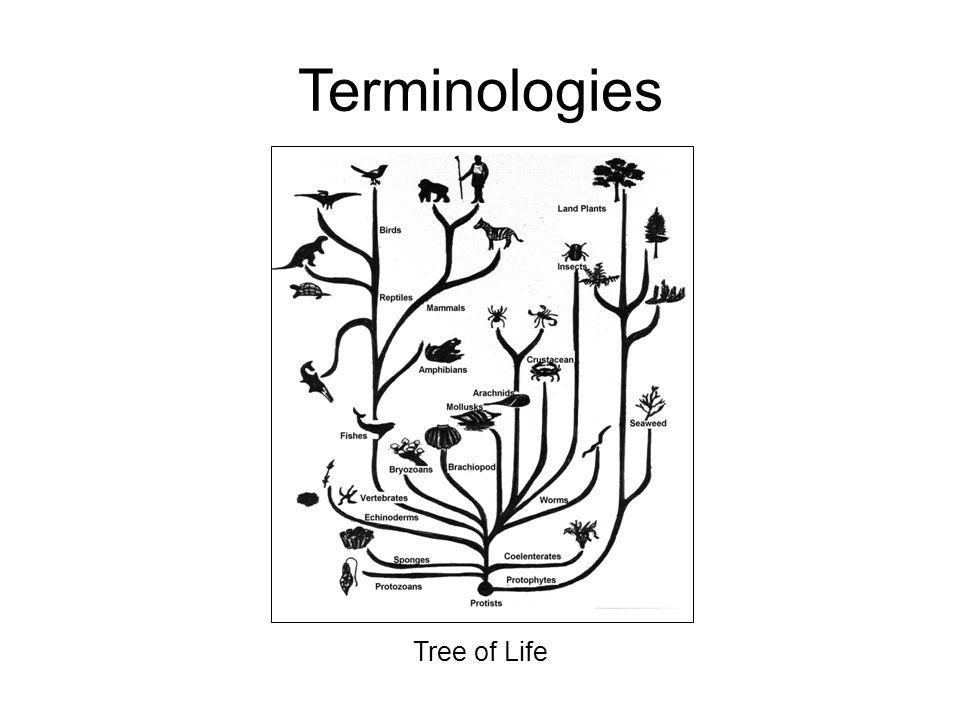 Tree of Life Terminologies