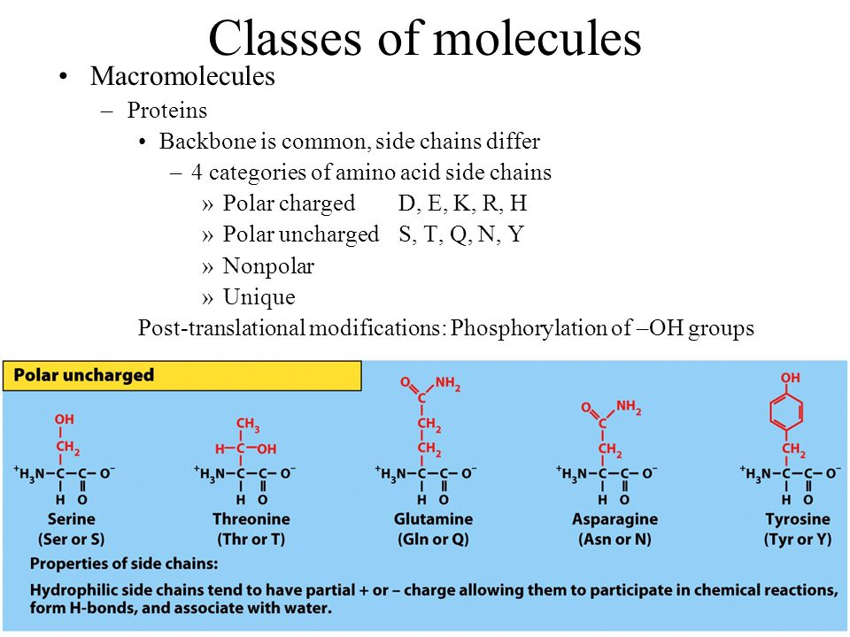 Classes of molecules Macromolecules –Proteins Backbone is common, side chains differ –4 categories of amino acid side chains »Polar chargedD, E, K, R,