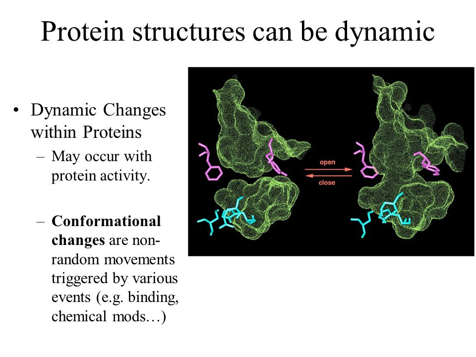 Protein structures can be dynamic Dynamic Changes within Proteins –May occur with protein activity. –Conformational changes are non- random movements