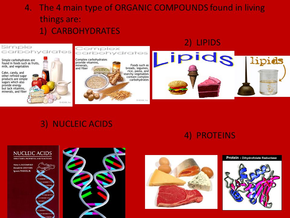 B.The Organic Compounds 1.CARBOHYDRATES a.
