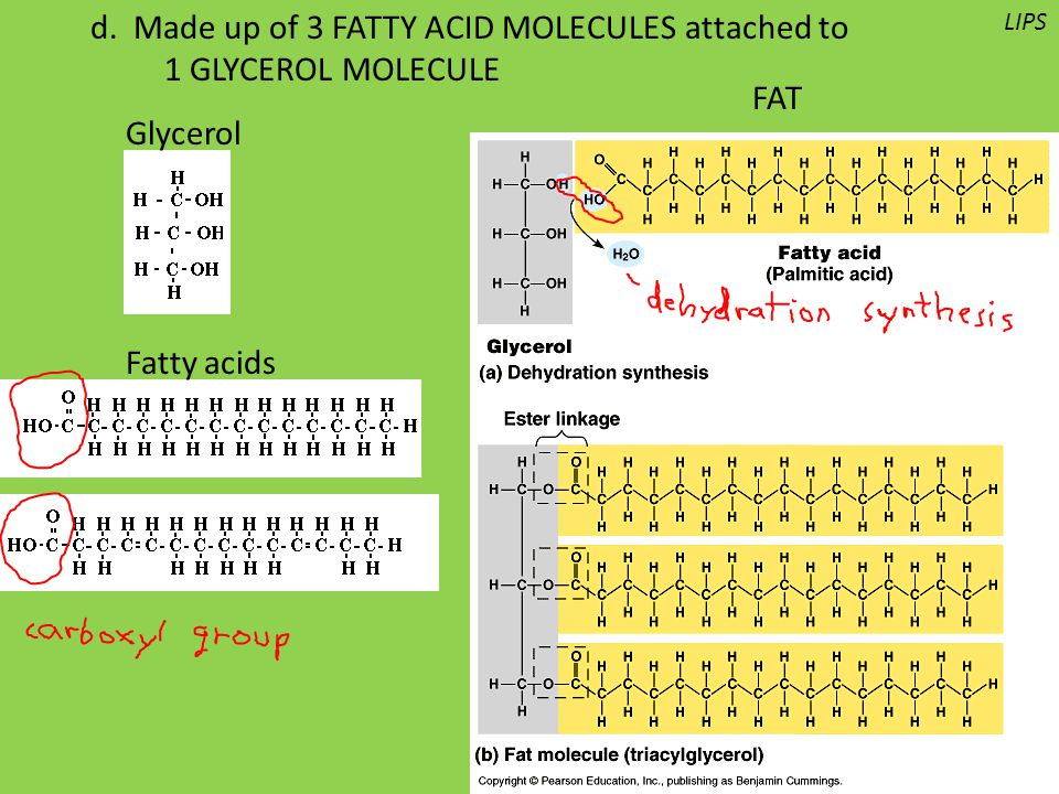 d. Made up of 3 FATTY ACID MOLECULES attached to 1 GLYCEROL MOLECULE Glycerol Fatty acids LIPS FAT