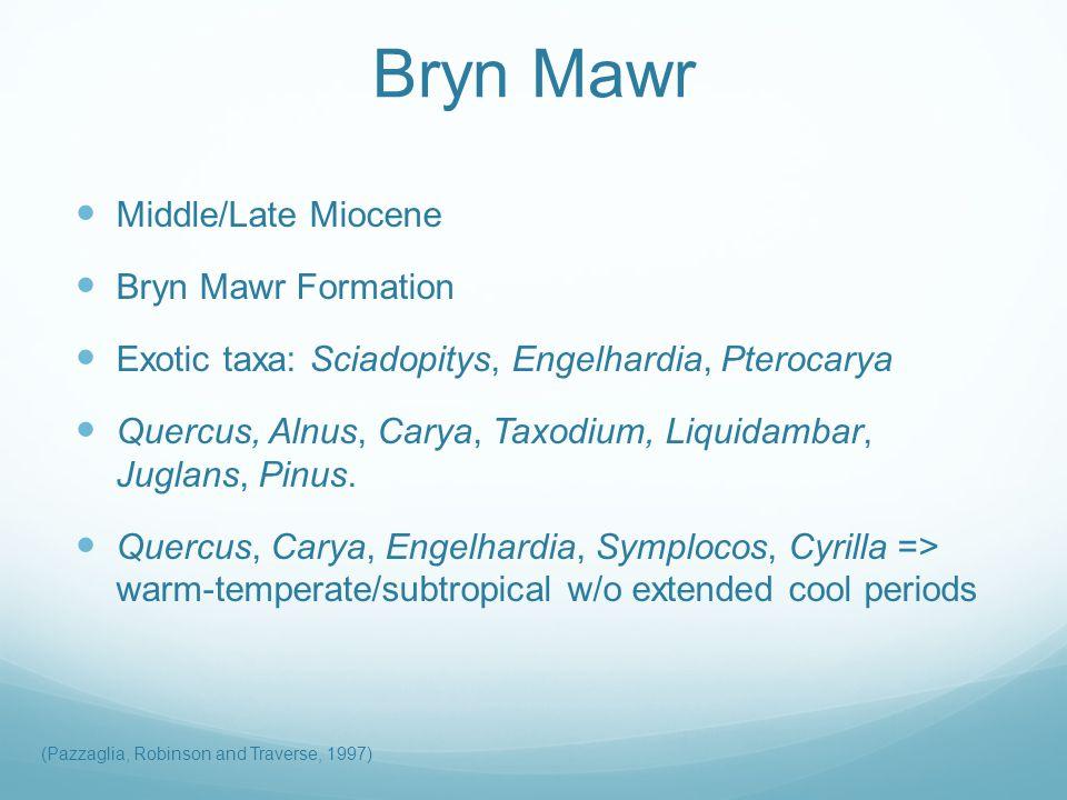 Bryn Mawr Middle/Late Miocene Bryn Mawr Formation Exotic taxa: Sciadopitys, Engelhardia, Pterocarya Quercus, Alnus, Carya, Taxodium, Liquidambar, Juglans, Pinus.