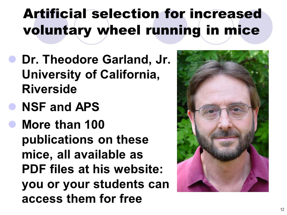 12 Artificial selection for increased voluntary wheel running in mice Dr. Theodore Garland, Jr. University of California, Riverside NSF and APS More t