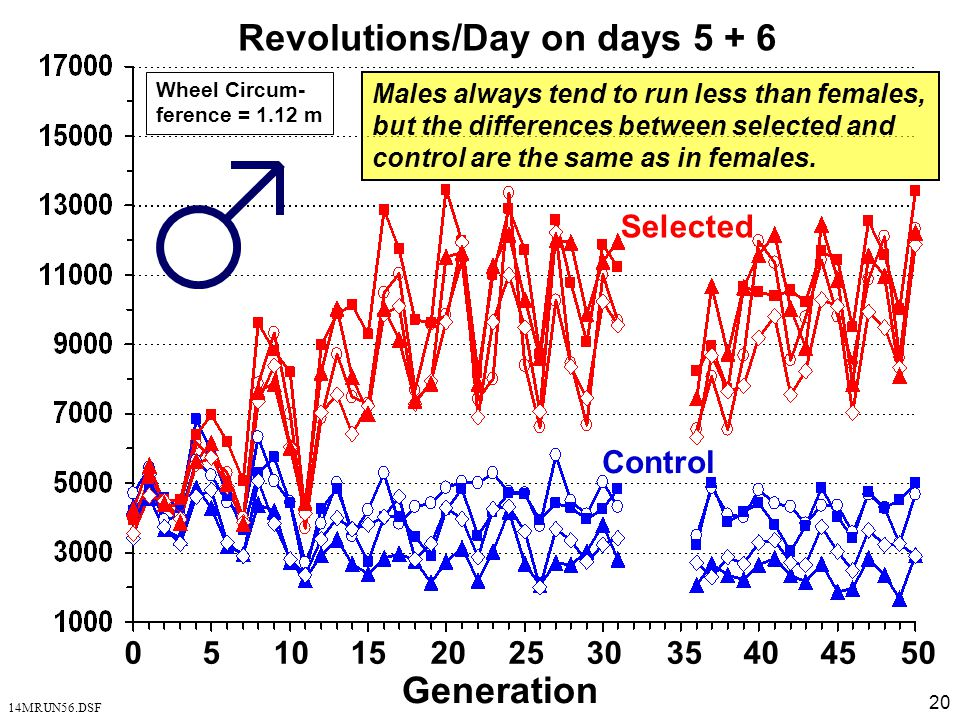 20 Revolutions/Day on days 5 + 6 Selected Control 0 5 10 15 20 25 30 35 40 45 50 Generation 14MRUN56.DSF Wheel Circum- ference = 1.12 m Males always t