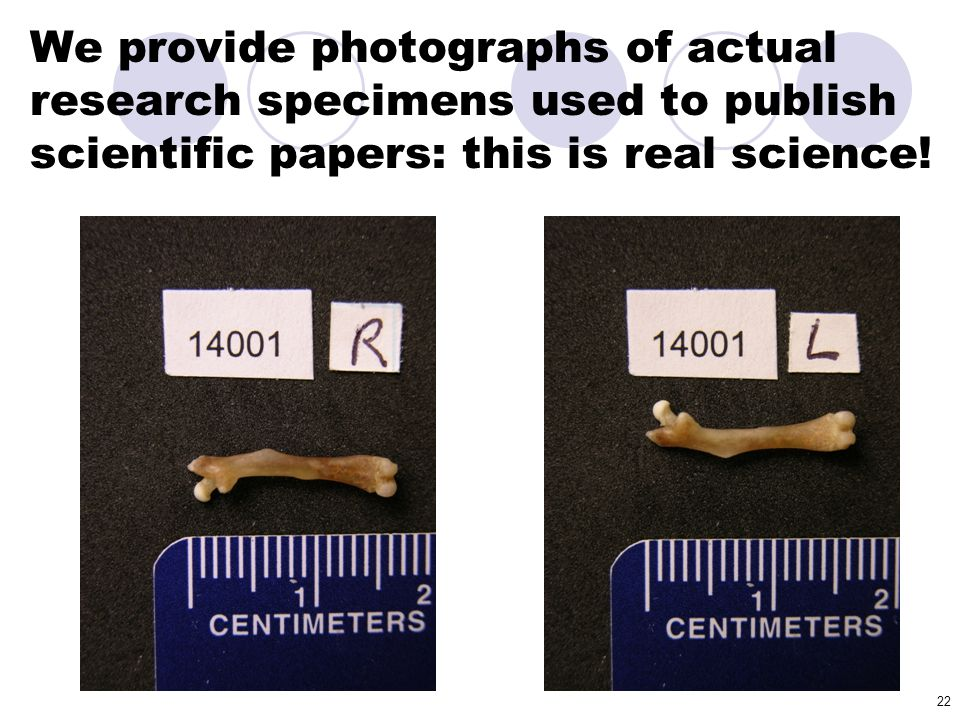 22 We provide photographs of actual research specimens used to publish scientific papers: this is real science!