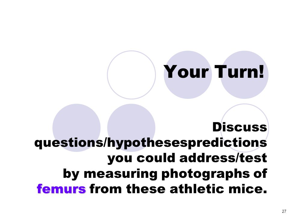 27 Your Turn! femurs Discuss questions/hypothesespredictions you could address/test by measuring photographs of femurs from these athletic mice.