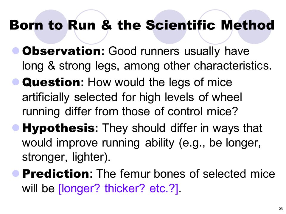 28 Born to Run & the Scientific Method Observation : Good runners usually have long & strong legs, among other characteristics. Question : How would t