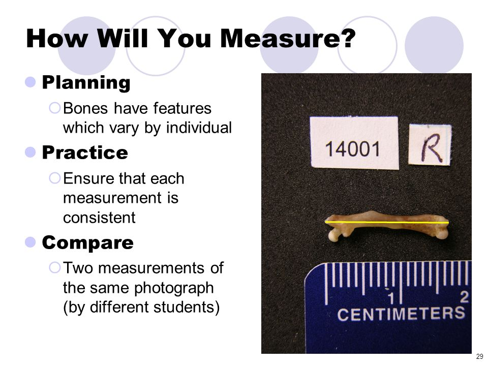29 How Will You Measure? Planning  Bones have features which vary by individual Practice  Ensure that each measurement is consistent Compare  Two m