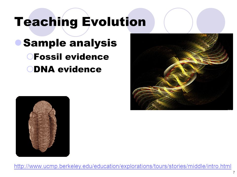 7 Teaching Evolution Sample analysis  Fossil evidence  DNA evidence http://www.ucmp.berkeley.edu/education/explorations/tours/stories/middle/intro.h