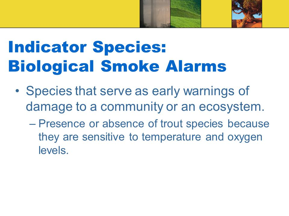 Indicator Species: Biological Smoke Alarms Species that serve as early warnings of damage to a community or an ecosystem.