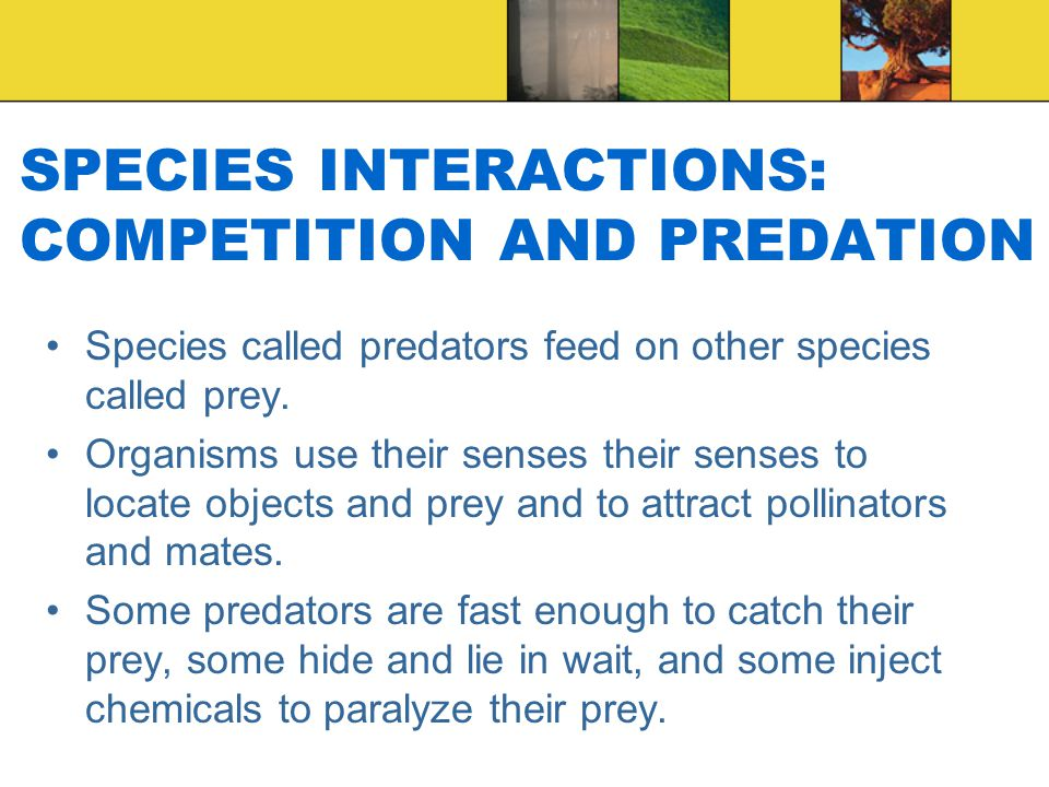 SPECIES INTERACTIONS: COMPETITION AND PREDATION Species called predators feed on other species called prey.