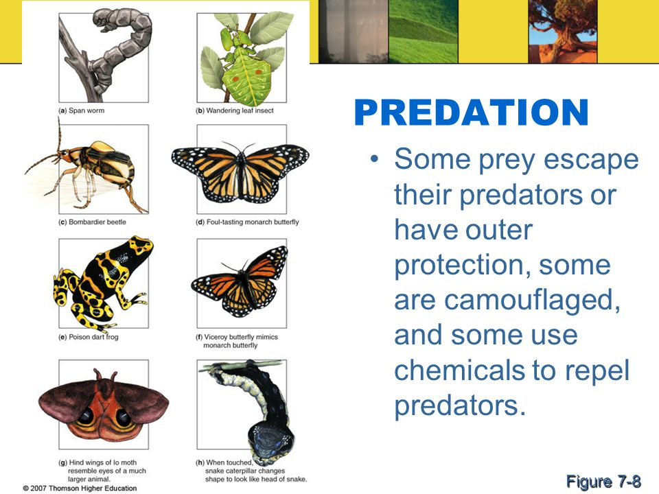 PREDATION Some prey escape their predators or have outer protection, some are camouflaged, and some use chemicals to repel predators. Figure 7-8