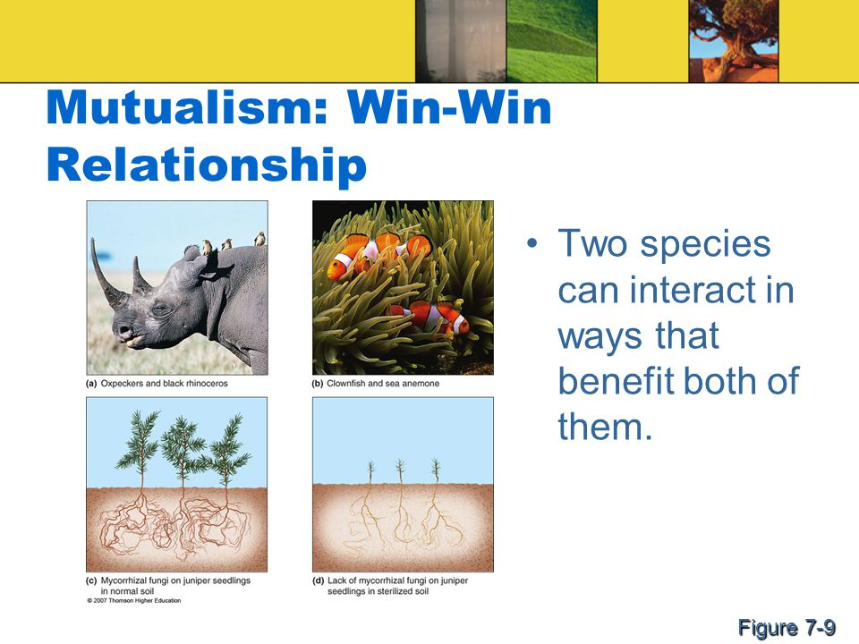 Mutualism: Win-Win Relationship Two species can interact in ways that benefit both of them. Figure 7-9